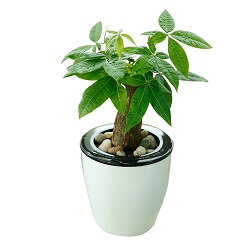 招财进宝-桌面小发财树