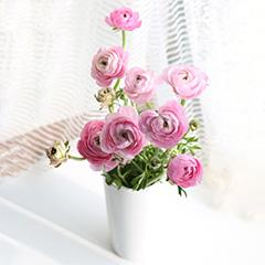 宠爱之名-5支粉色洋牡丹(送花瓶)